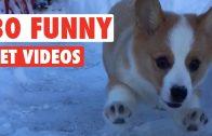 30 Funny Pets