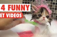 Funny Pets Compilation