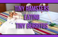 Tiny Hamster eating Tiny Burritos